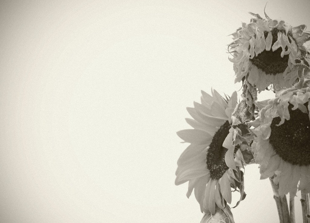 wilted1